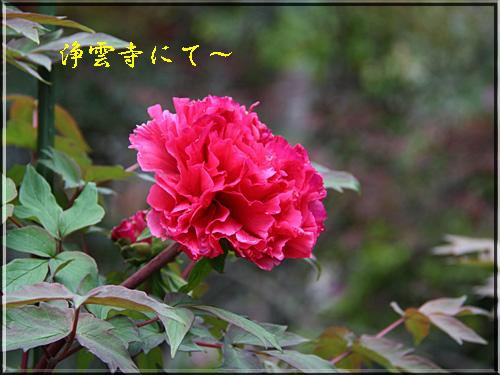 d0155321_1911634.jpg