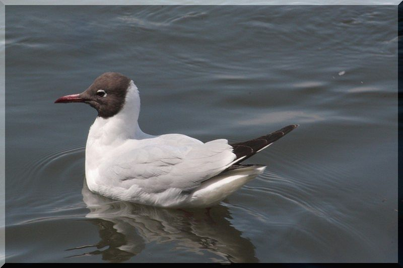上野不忍池の鳥さん_f0100825_21523786.jpg