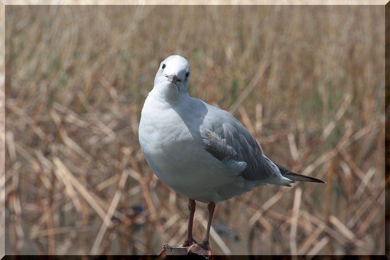 上野不忍池の鳥さん_f0100825_2152470.jpg