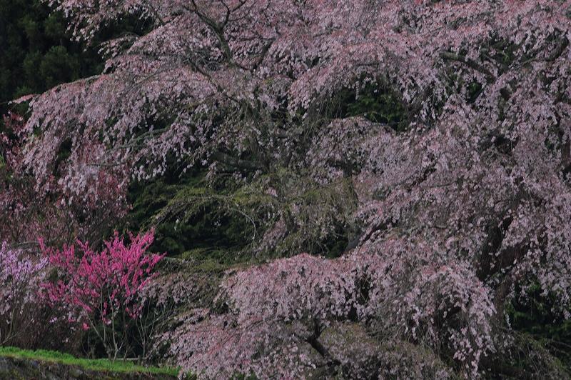 桜時間 4_f0050534_6281644.jpg