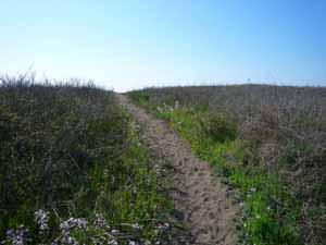 砂丘を登って_c0019338_017345.jpg