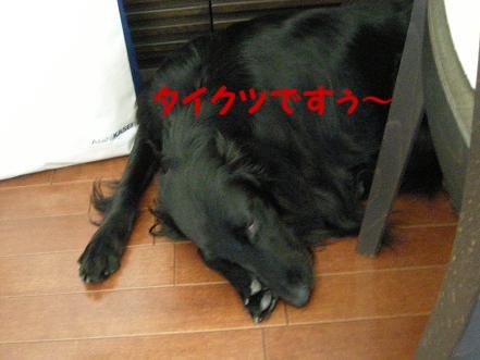 f0107145_21451758.jpg