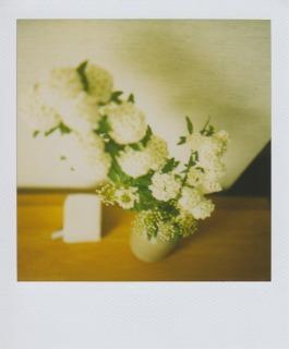 花に癒されて_b0178548_951349.jpg