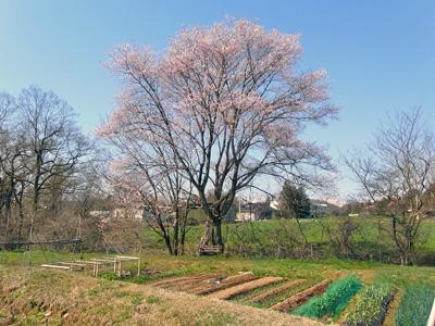 オラホの村にも春到来_c0063348_8304722.jpg