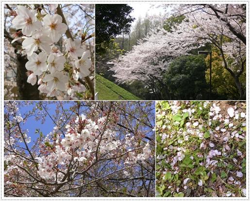 桜から緑の季節へ_c0069048_21584736.jpg