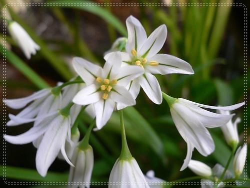 桜から緑の季節へ_c0069048_21593919.jpg