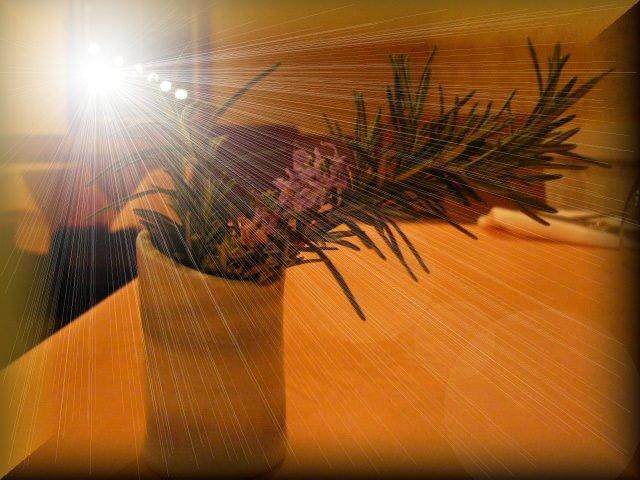 畑のハーブ達が少しずつ枝分かれ・・・嬉しい!_c0222448_2072186.jpg
