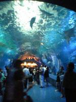 ホテルの中の水族館_f0232060_1044122.jpg