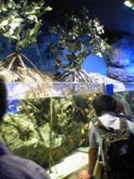 ホテルの中の水族館_f0232060_10441381.jpg