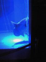 ホテルの中の水族館_f0232060_10443690.jpg