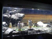 ホテルの中の水族館_f0232060_1045050.jpg