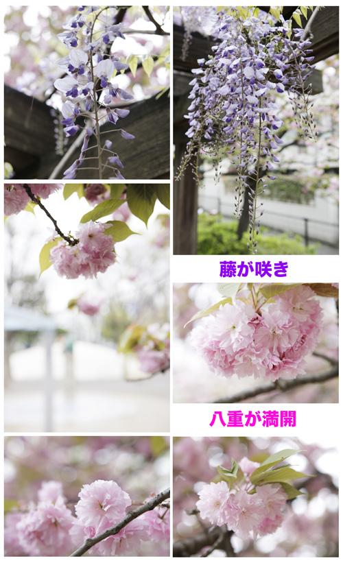 近くの公園_a0155464_13485855.jpg