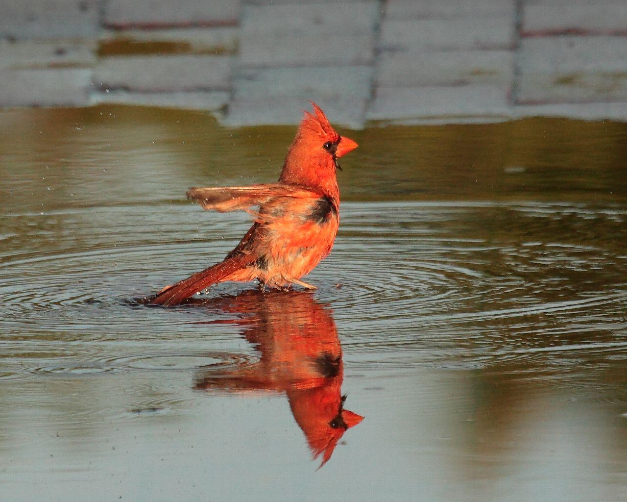 フロリダの野鳥_f0105570_21384674.jpg