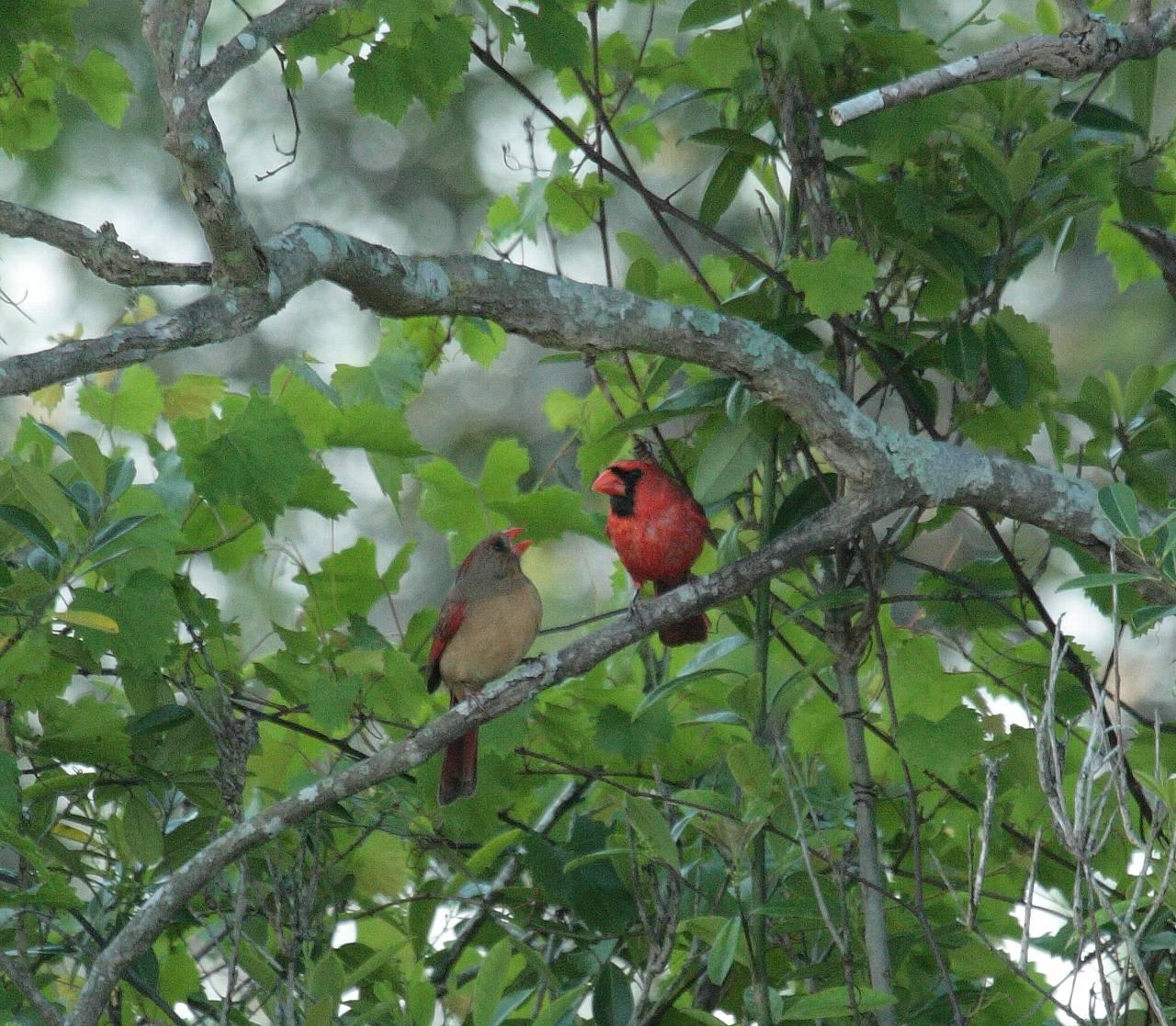 フロリダの野鳥_f0105570_21391176.jpg