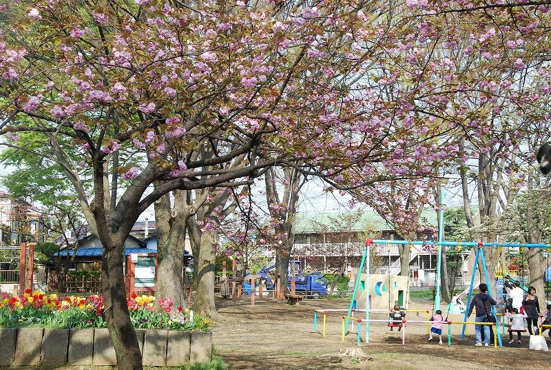 八重桜など_c0187781_015712.jpg