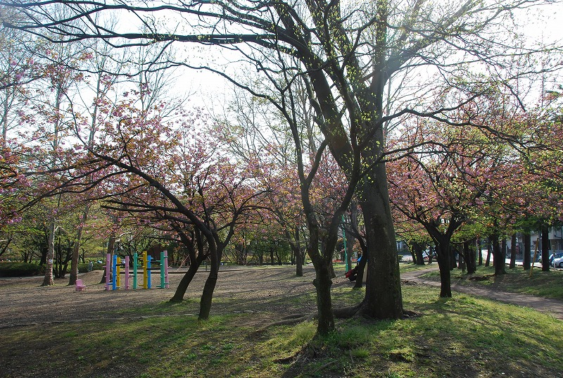 八重桜など_c0187781_0173216.jpg