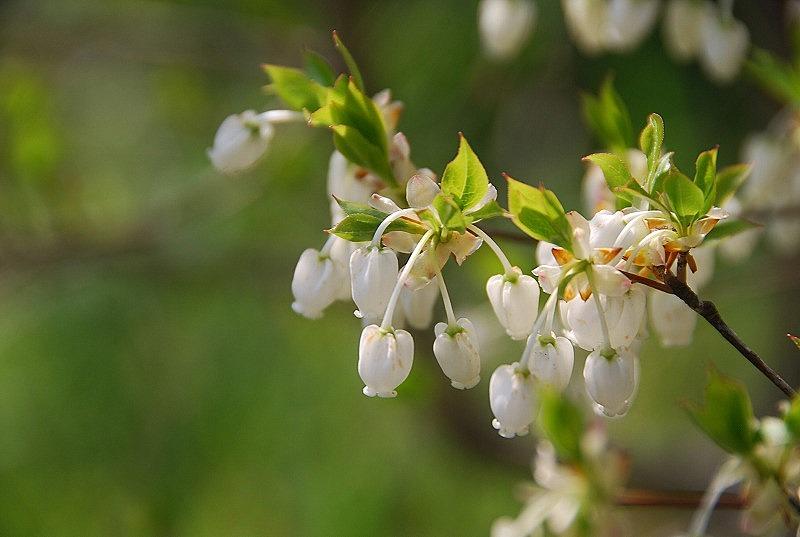 八重桜など_c0187781_0191926.jpg