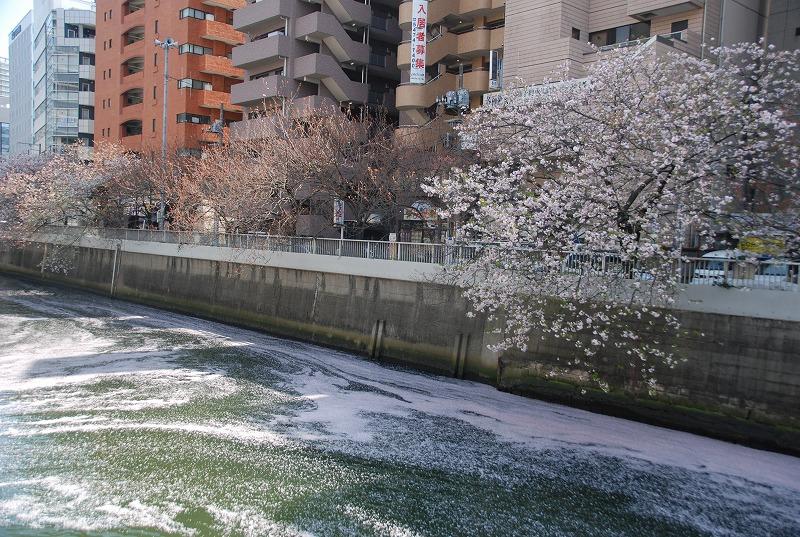 八重桜など_c0187781_0362266.jpg
