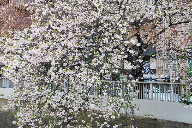 八重桜など_c0187781_0365630.jpg