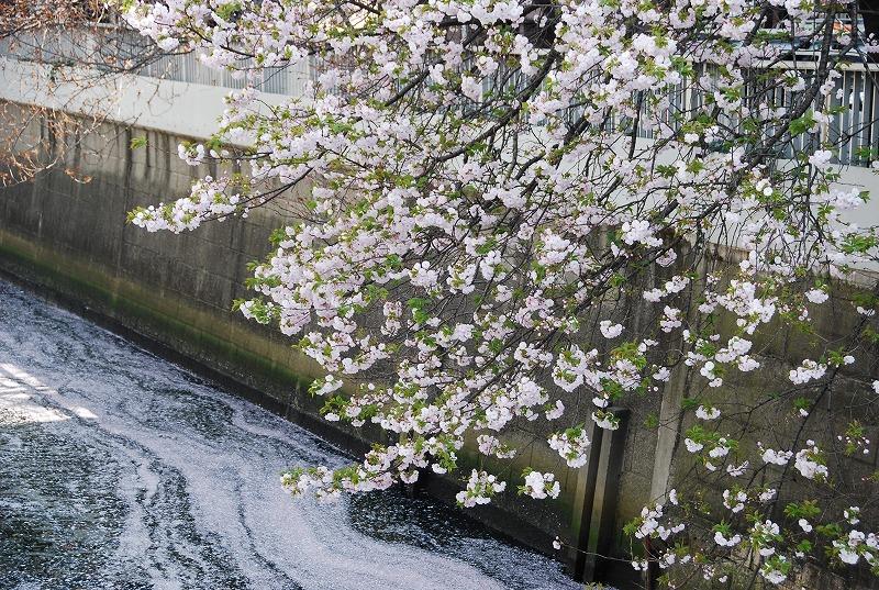 八重桜など_c0187781_0372080.jpg