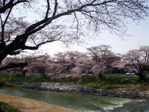 桜3分咲き_f0019498_18591416.jpg