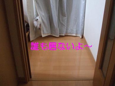 f0179203_815653.jpg