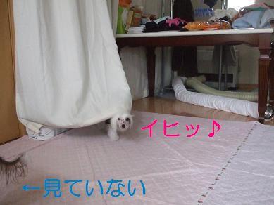 f0179203_823428.jpg