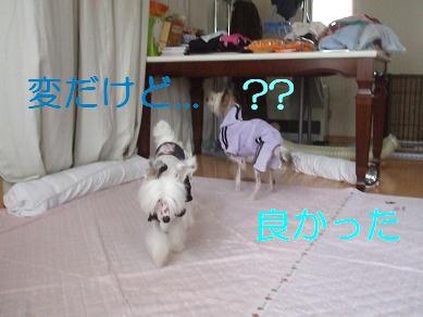 f0179203_843824.jpg