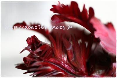 f0203406_7545282.jpg