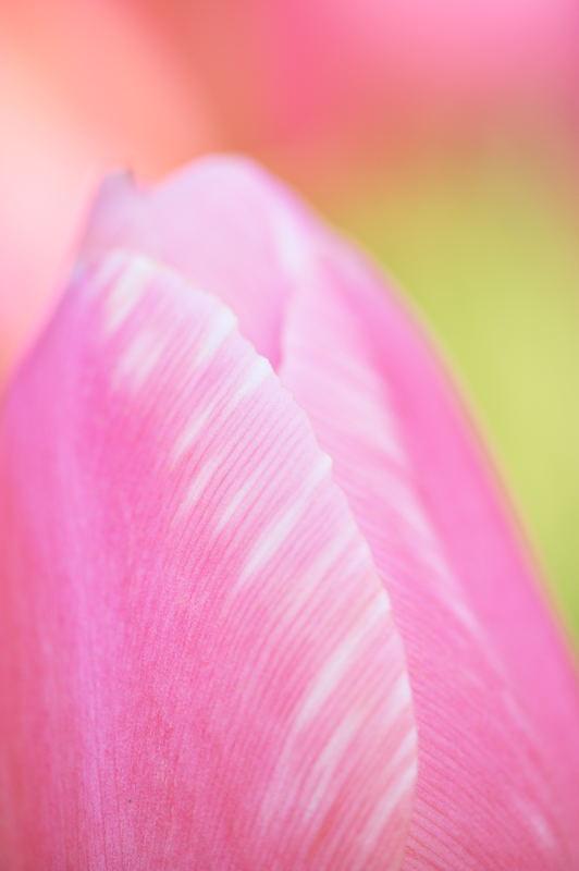 公園で花撮り_f0032011_1914669.jpg