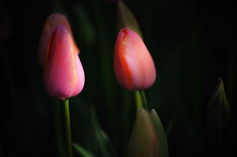 公園で花撮り_f0032011_192077.jpg