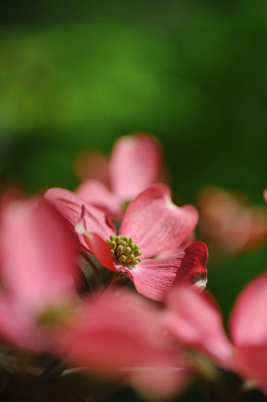 公園で花撮り_f0032011_1921326.jpg