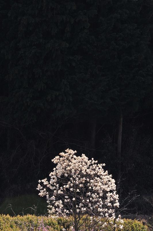 奈良巡礼7 桜のかげに_f0050534_22018100.jpg