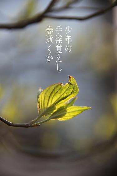 f0100234_2148199.jpg