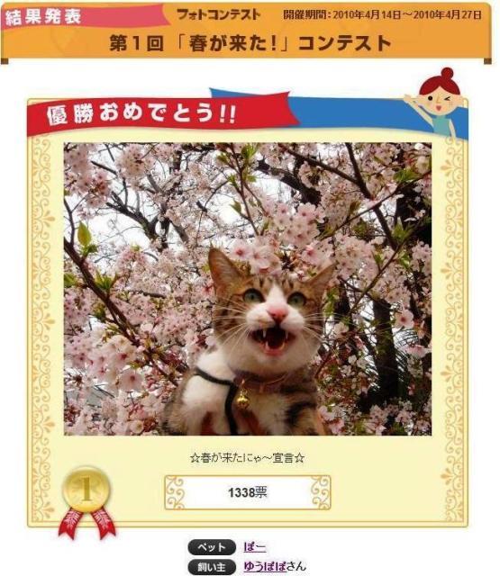 Yahoo!ペット「春が来た」フォトコンテスト優勝猫 ぽー編。_a0143140_15343635.jpg