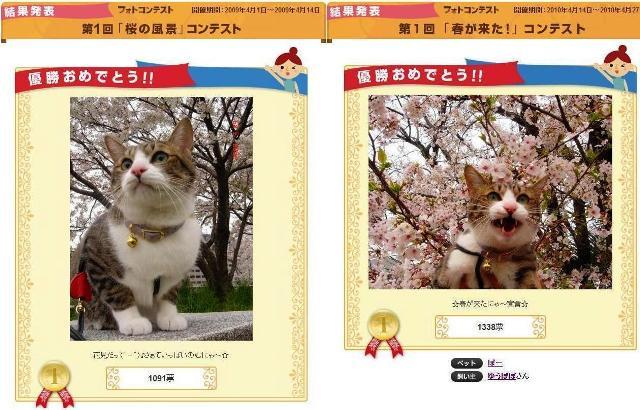 Yahoo!ペット「春が来た」フォトコンテスト優勝猫 ぽー編。_a0143140_15361395.jpg