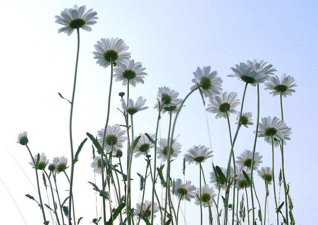 香りで感じる足元の幸せ_c0156749_1212552.jpg