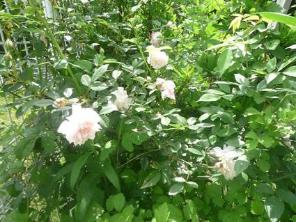 秘密の花園_e0147757_23571455.jpg