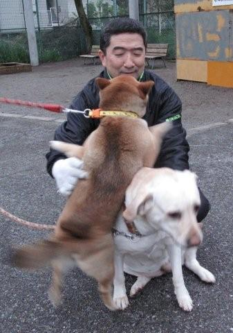 Shadow boxing and dogs_c0157558_237724.jpg