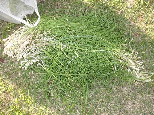 ヤンバルの野草料理_c0180460_0243547.jpg