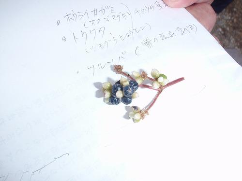 ヤンバルの野草料理_c0180460_0251761.jpg
