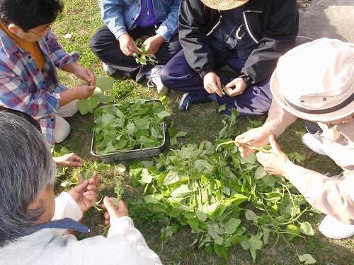 ヤンバルの野草料理_c0180460_0265294.jpg
