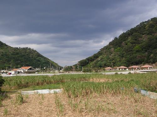 ヤンバルの野草料理_c0180460_034519.jpg