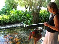 ベトナムへ行く。⑧  ~鯉と私の朝食~ _f0232060_1623461.jpg