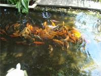 ベトナムへ行く。⑧  ~鯉と私の朝食~ _f0232060_162444.jpg