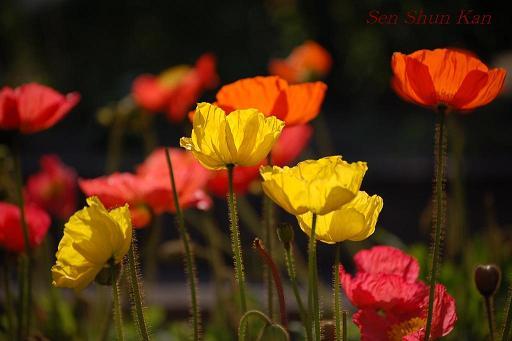 植物園 4月の終わり_a0164068_22341481.jpg