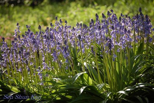 植物園 4月の終わり_a0164068_22361347.jpg