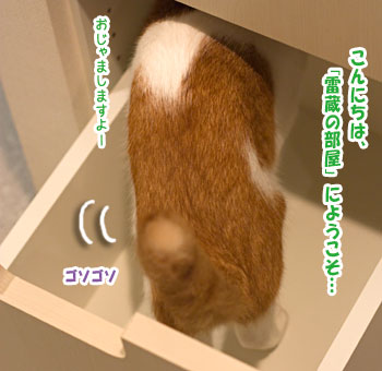 a0119470_0322011.jpg