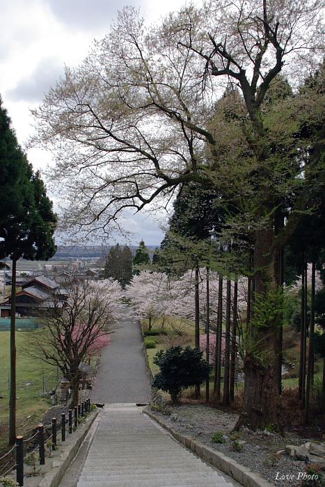 桜を求めて琵琶湖一周ドライブ ④_a0116472_1454340.jpg
