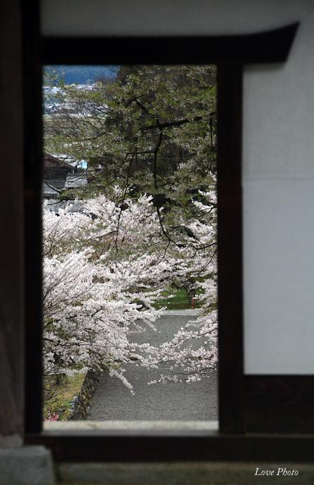 桜を求めて琵琶湖一周ドライブ ④_a0116472_1464742.jpg